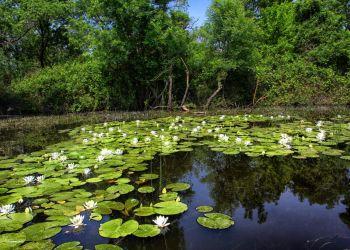 Karacabey Kocaçay Deltası Longoz Ormanları