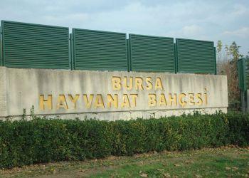 Bursa ZOO Hayvanat Bahçesi